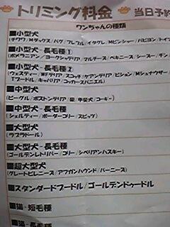 """""""短毛種の猫""""のトリミングって…(-o-;)"""
